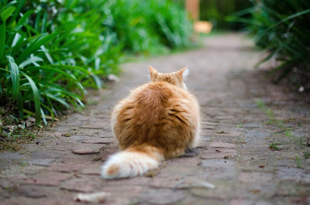 catgarden